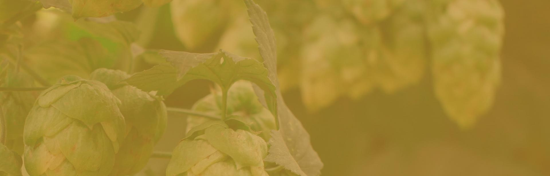 Hops clusters