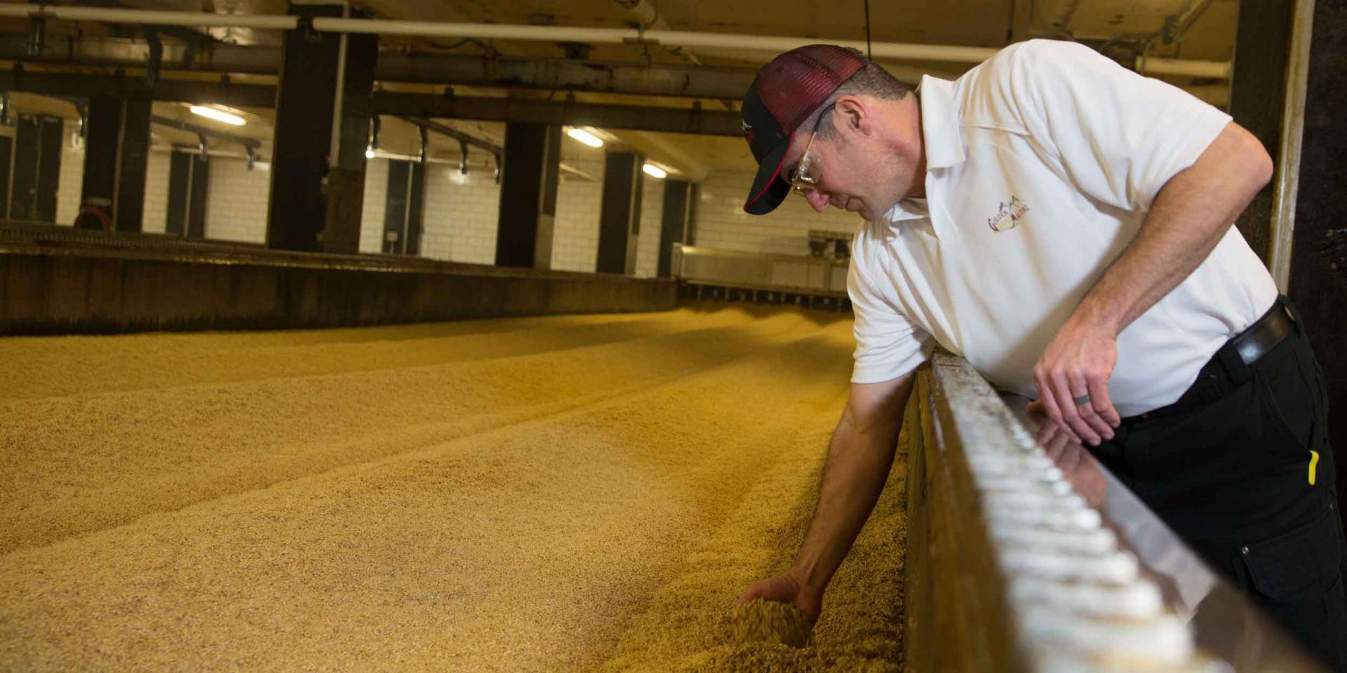 Golden Worker Grabbing Grain