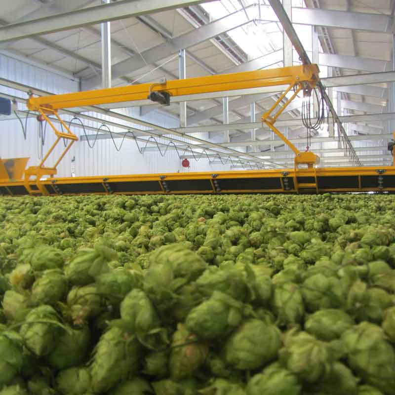 Hops in factory