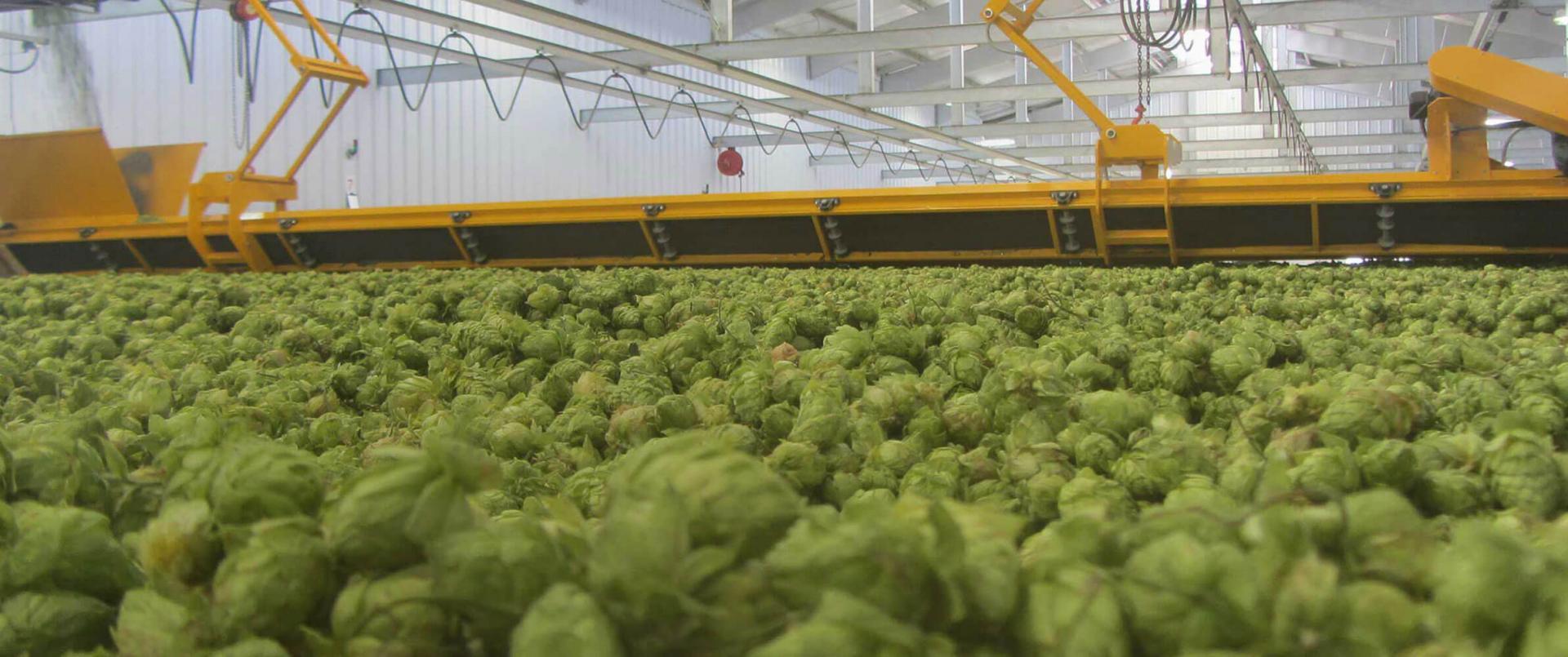 MillerCoors Our Beers